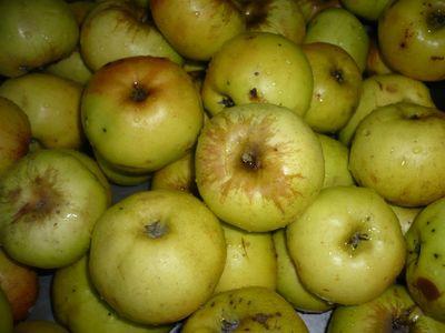 Яблоки моченые с капустой простые