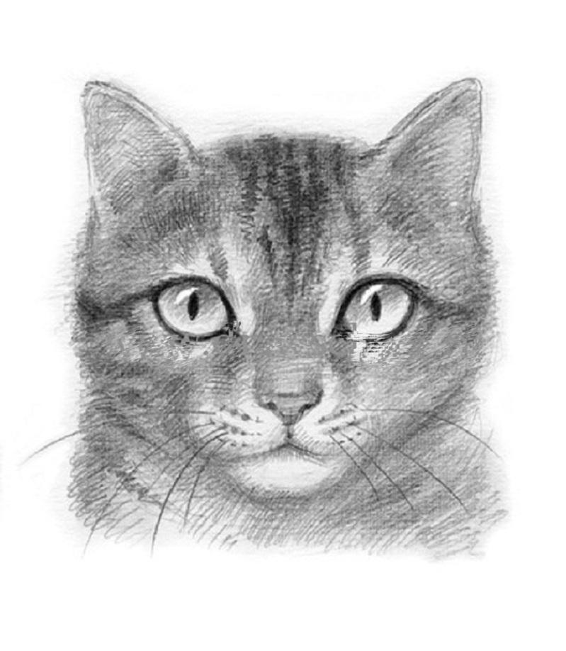 Как нарисовать кошку : 9 пошаговых инструкций