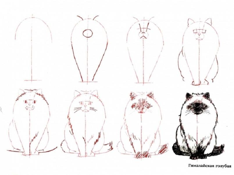 Как нарисовать кошку боком