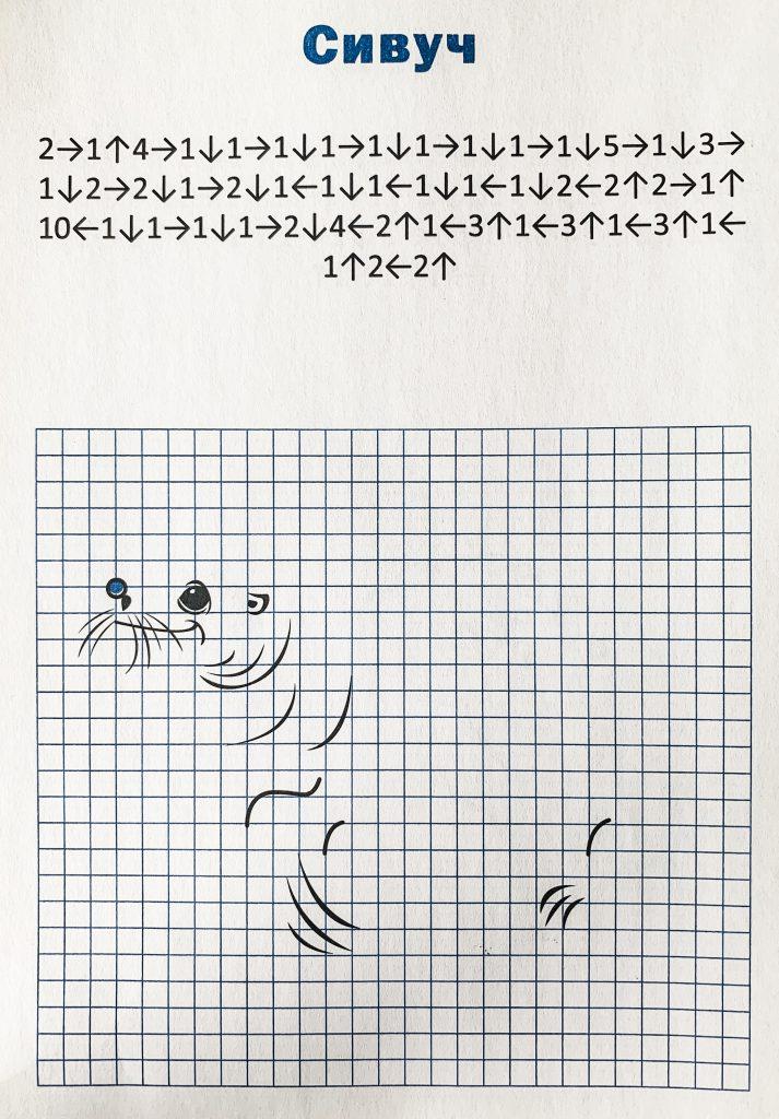 Сложный рисунок по клеточкам сивуч