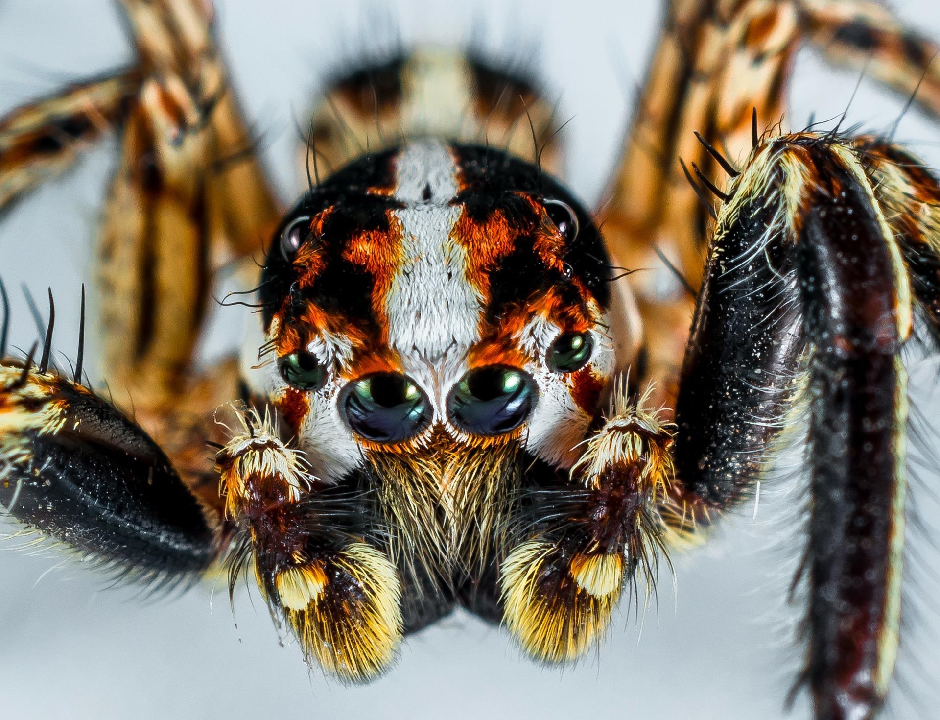 Сон про паука