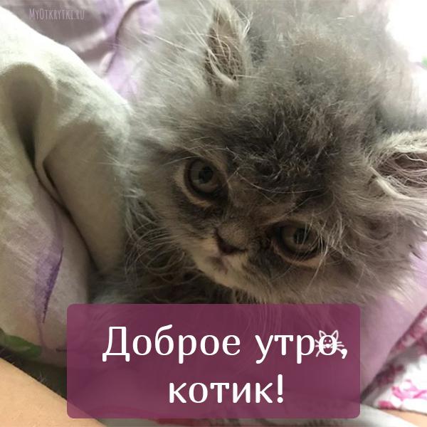 с добрым утром котик мужчине