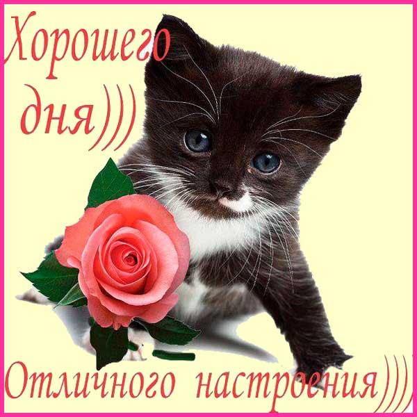 пожелание хорошего дня и настроения девушке