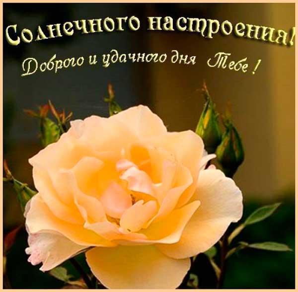 пожелание хорошего дня и настроения