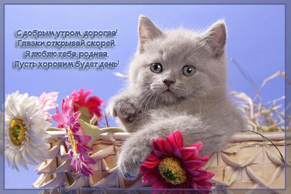 С добрым утром - пожелание любимой девушке
