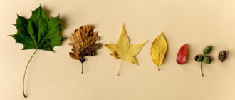 как засушить листья